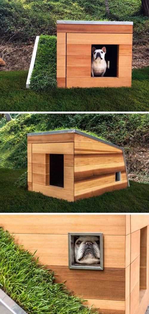 Medium Of The Dog House