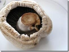 decaying-mushroom