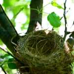 Cooking for an Empty Nest: Downsizing Your Kitchen
