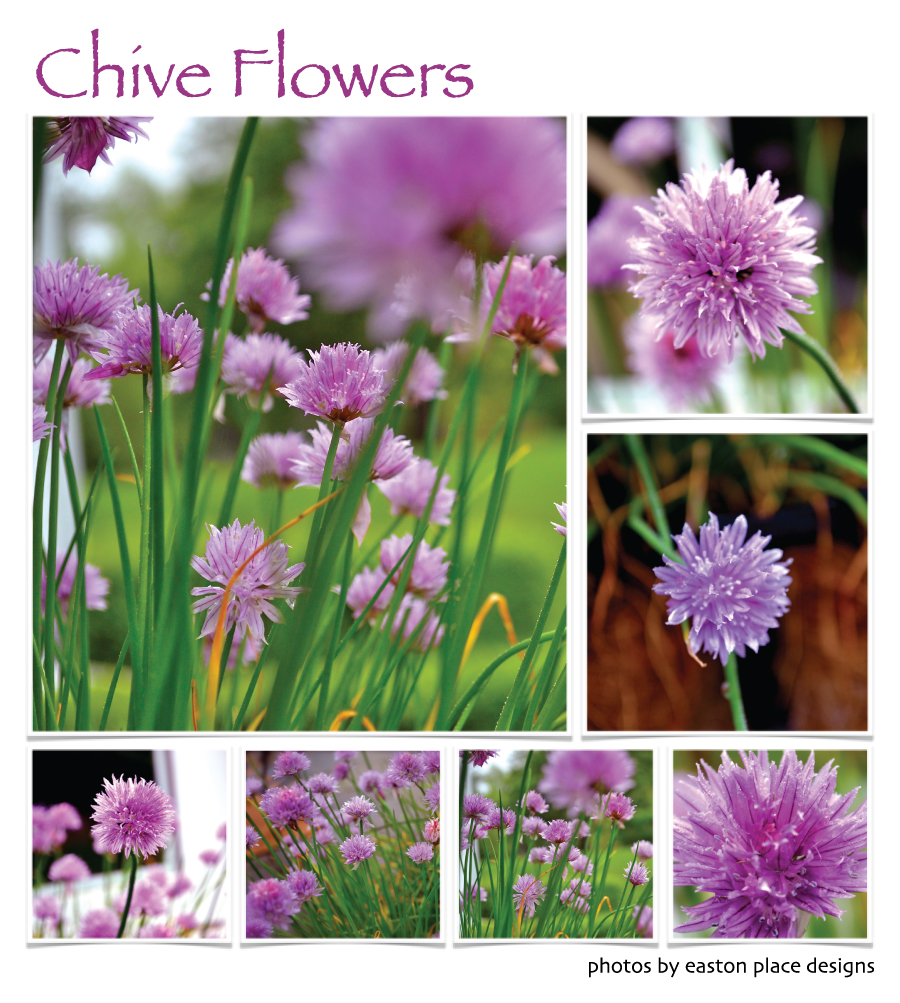 Are Chive Flowers Edible Cooking With Books