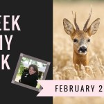 A Peek in My Week: Games, Mattering, Questions, Laughter & Learning WHEW!