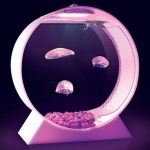 The Jellyfish Aquarium – the REAL Deal for your Desktop