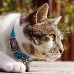 G-Paws Pet GPS Tracker ensures you know where your furry kid is at all times