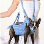 """Puppoose – """"Hang Out"""" with your Dog"""