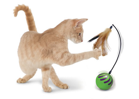 Random motion cat toy helps drive your feline nuts for Best motorized cat toys