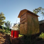 The Flow Hive Honey Harvester gives you honey on tap