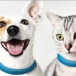 Scollar Smart Collar looks great on small dogs and cats