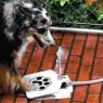 Doggie Fountain is self serve