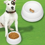 Finicky Feeders hides a treat for picky dogs