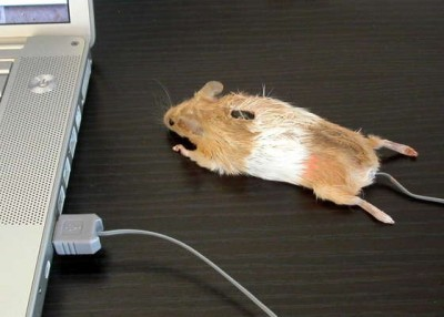 mouse/mouse
