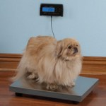 Pet Scale lets you know whether Fido needs a diet