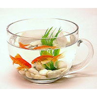 teacup-fish-bowl.jpg