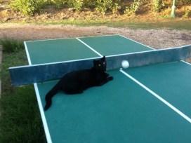 Aufmerksame Begleiter: tagsüber auf der Tischtennisplatte, abends gern am Kamin