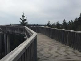 Waldwipfelweg in Sankt Englmar