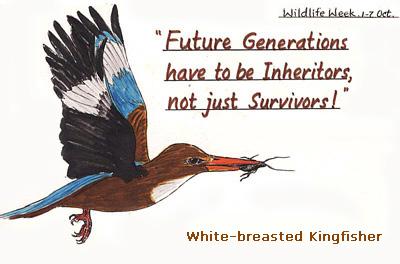 white-breastedkingfisher