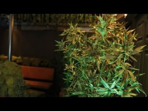 """Video thumbnail for youtube video Former Narcotics Officer: """"We Terrorized Families Over a Bag of Pot"""" 
