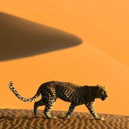 Namibia, fra oceano e deserto  Il mondo di Himba e Herero