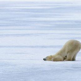 A casa dell'orso bianco  nelle selvagge Svalbard
