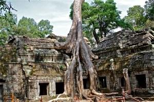 angkor-wat-and-tree