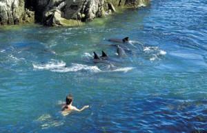 dolphin-excursion