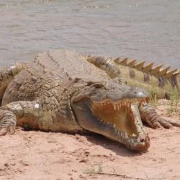 Outback, boomerang e canguri  L'Australia di Crocodile Dundee