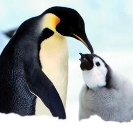 Buon Natale con i pinguini