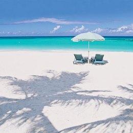 Il coriandolo Anguilla