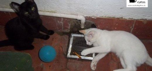 Kato y Saya, nuestos gatos jugando de cachorros | Foto: www.cosasdegatos.es