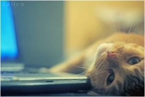 El placer de escuchar a un gato ronronear | Foto: mare-wrath.deviantart.com/