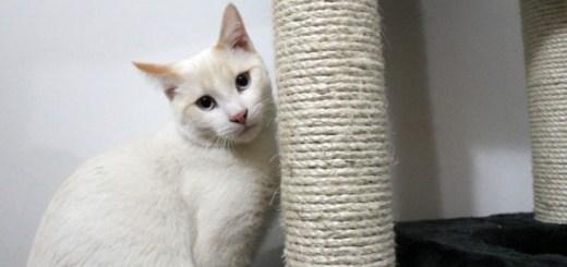 rascador-bueno-para-gato-kato-598x372