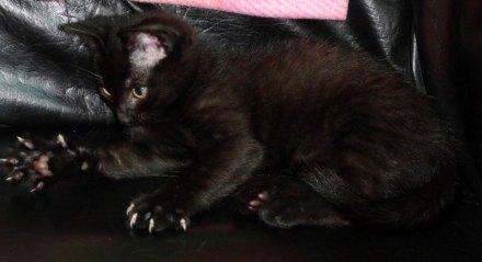 Utiliza alguno de los trucos para cortar las uñas de tu gato | Foto: night-lioness.deviantart.com