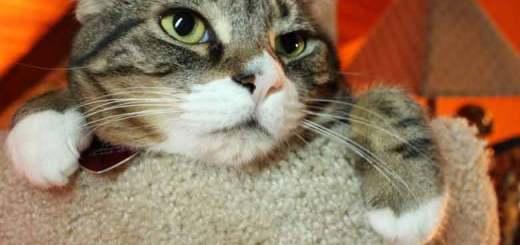 La cabeza nos puede dar pistas de lo que el gato está diciendo o sintiendo | Foto: edwardvb.deviantart.com