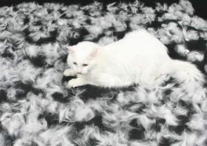 Durante la primavera el gato pierde la mitad del total de pelo que perderá en todo el año