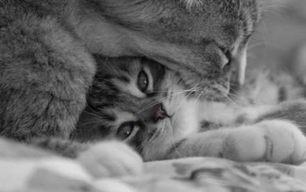 La preparación del hogar para el nuevo gato es crucial para su bienestar | Foto: pumax84.deviantart.com