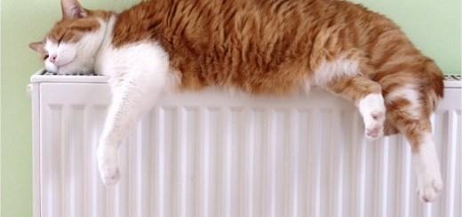 calefaccion-radiador-gato