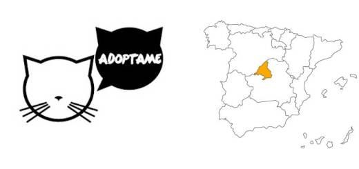 Adoptar gatos en Madrid (España)