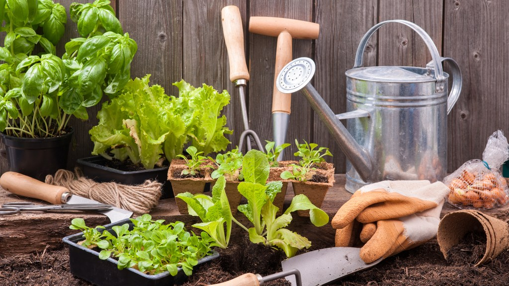 Seedlings of lettuce with gardening tools outside the potting shed; Shutterstock ID 246478183; PO: today.com