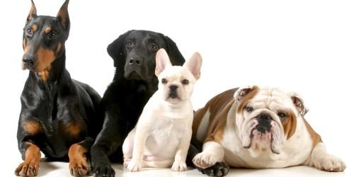 Παρεξηγημένες ράτσες σκύλων