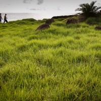 """Ou pourquoi elle est aussi appellée """"Green Island"""""""