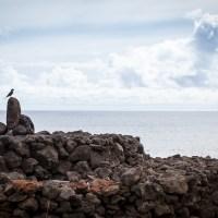 Oiseau perché aux alentours de Tahai