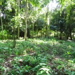 Lot for sale in Uvita good for spec home.