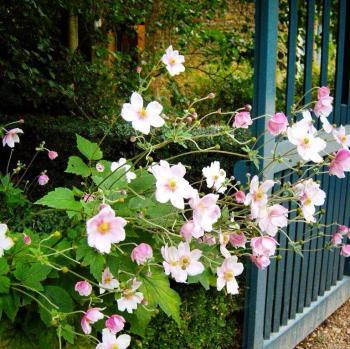 hidcote garden national trust chipping campden cotswolds