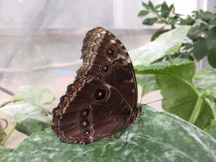 stratford-butterfly-farm-cotswolds-concierge-16