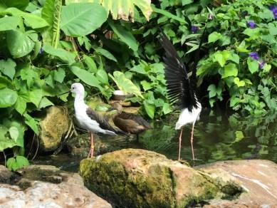 slimbridge-wetlands-centre-cotswolds-concierge (52)