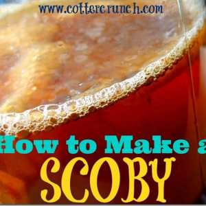 How to Make your own Kombucha Scoby
