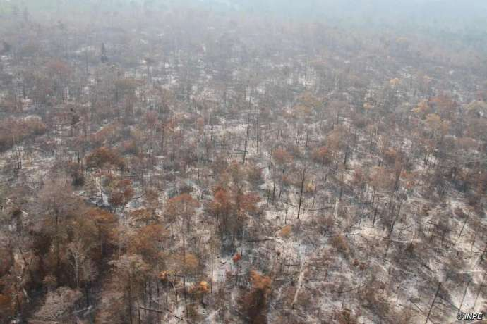 Vast swathes of forest in Arariboia have been destroyed by illegal loggers and by fires which the authorities have failed to contain. © INPE