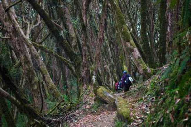 nepal-community-forest-management1