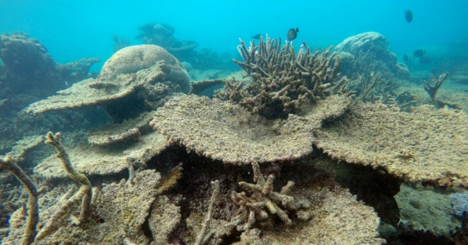 Scientists record biggest ever coral die-off in history