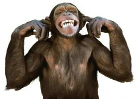 monkey-with-fingers-in-ears