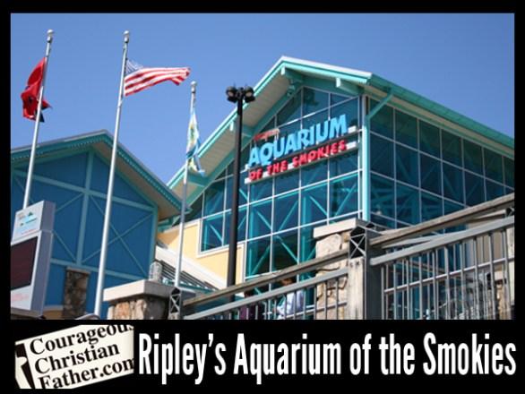 Ripley 39 S Aquarium Of The Smokies Review Courageous